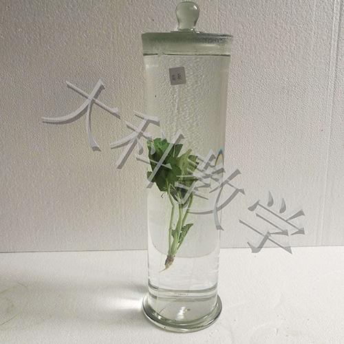 蜀葵浸制标本