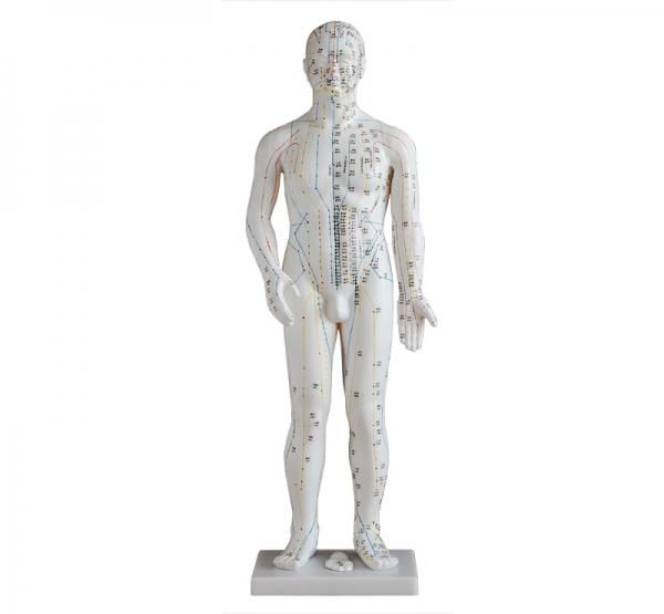 人体针灸模型70CM